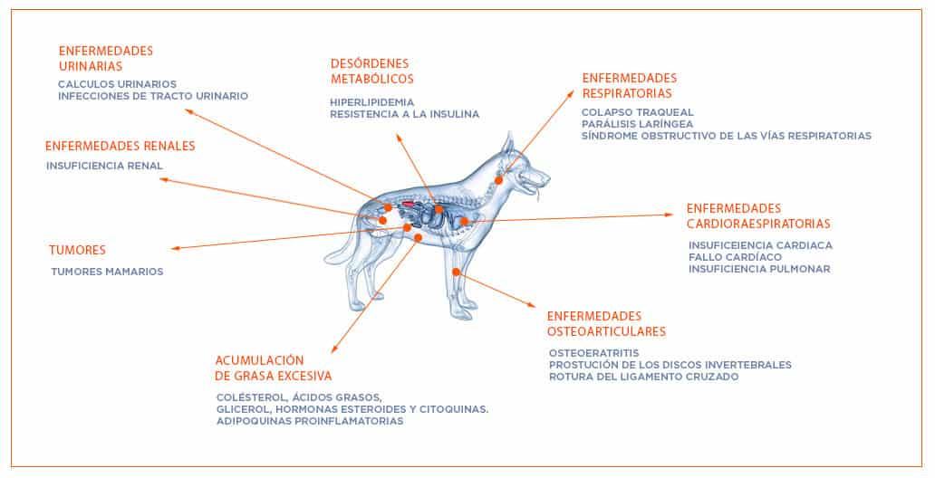 enfermedades asociadas a la mala nutricion en perros
